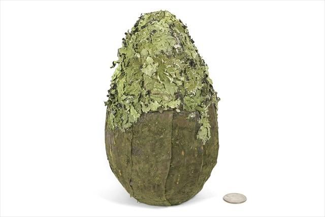 "Ball Green Bark/Lichen Oval 8"""