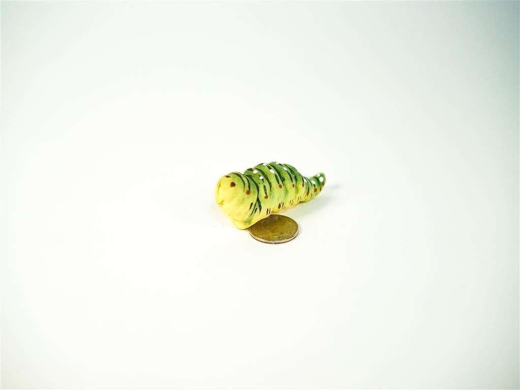 """Caterpillar Green Swallowtail 3"""""""