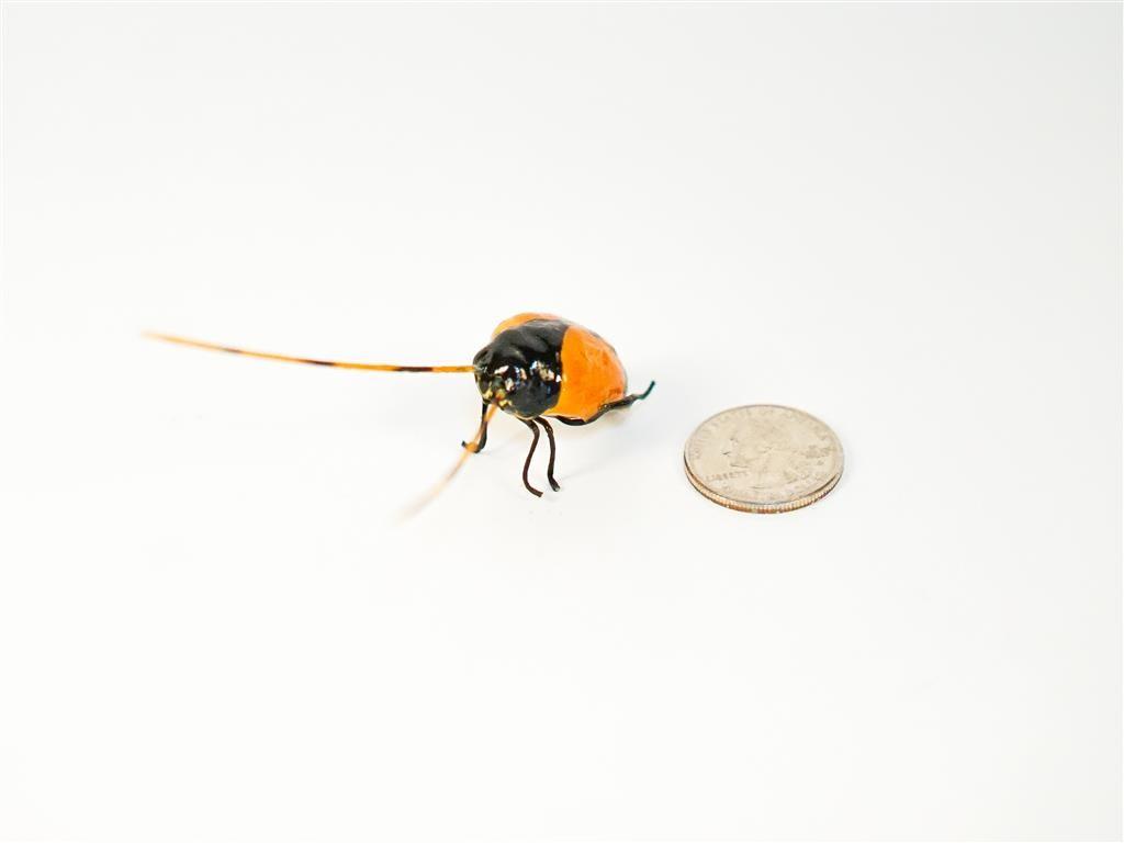"""Beetle Orange Longhorn 1.5"""""""