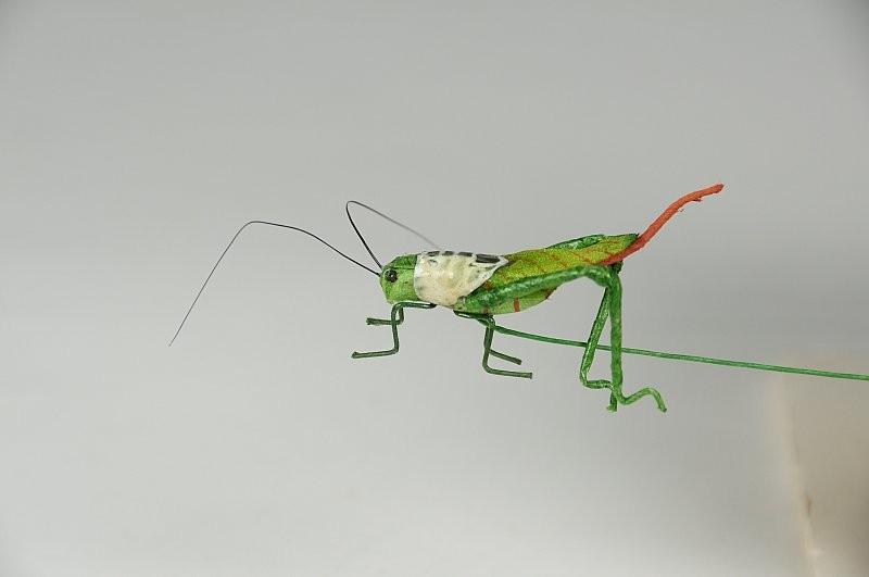 "Grasshopper Green Tail 1"""