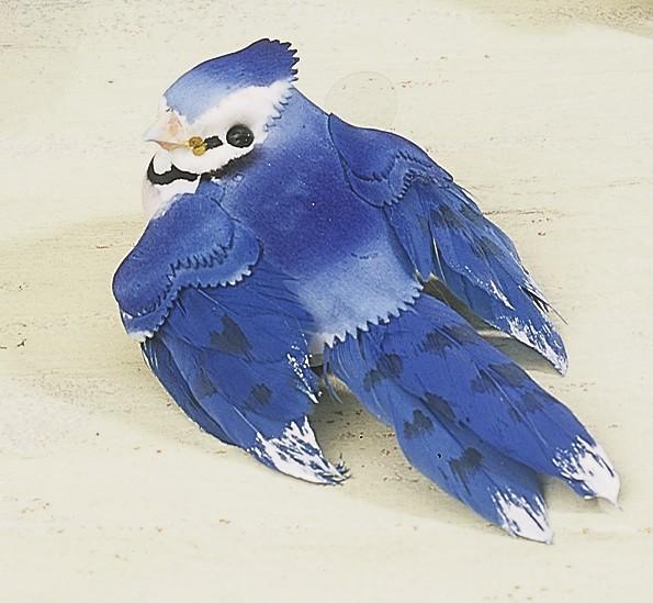 "Bird Blue Jay 3"""