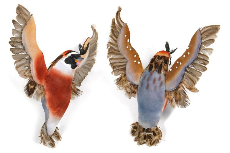 "Bird Quail Blue Flying 6"""