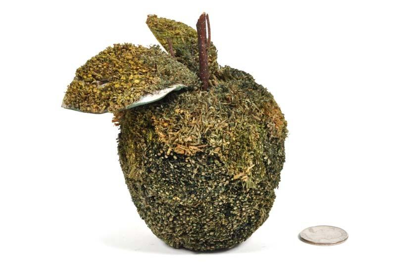 """Apple Green Moss 3.5"""""""