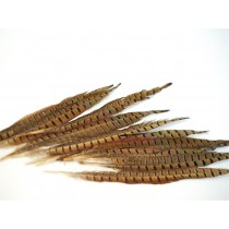 Pheasant Feather 14""