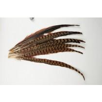 "Pheasant Feather 16"""