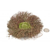 Nest Brown Twig/Moss/Grass 6""