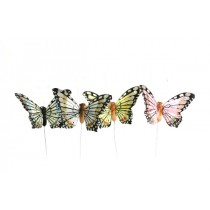 Butterfly Yellow/Grn/Blu/Pnk 2.5""