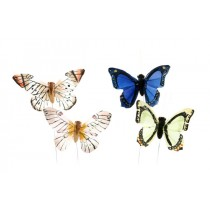"Butterfly Blue/Yel/Org/Grn 2.5"""