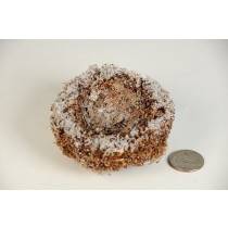 Nest Snow Brown Twig/Bark 3""