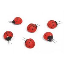 "Ladybug 1.25"""