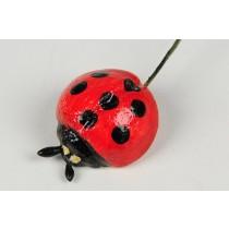 "Ladybug 1"""