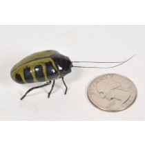 Beetle Green 1.5""