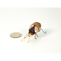Beetle Goldsmith 1.5""