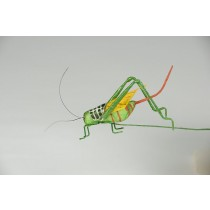 Grasshopper Green Tail 1.5""