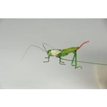 Grasshopper Green Tail 1""