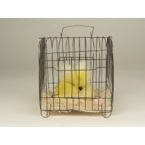 """Rabbit Fuzzy Yellow In Cage 5.5"""""""