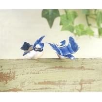 Bird Blue Jay Flying 1""