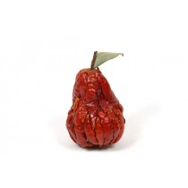 Chili Pepper Pear 3""