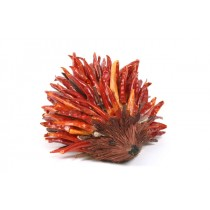 Chili Pepper Hedgehog w/Twig 5""