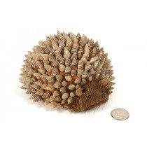 Hedgehog Nat. Sea Shell Back 6""