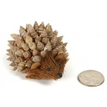 Hedgehog Nat. Sea Shell Back 2""