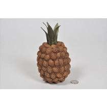 """Pineapple Brown Nutshell 7"""""""