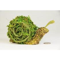 """Snail Green Moss/Burlap/Lichen 5.5"""""""