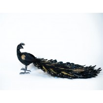 Peacock Black w/Gold Tail 16""