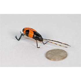 """Beetle Long Horn Blk/Org 1.25"""""""
